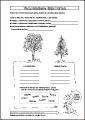 AB 5 – Verschiedene Baumarten